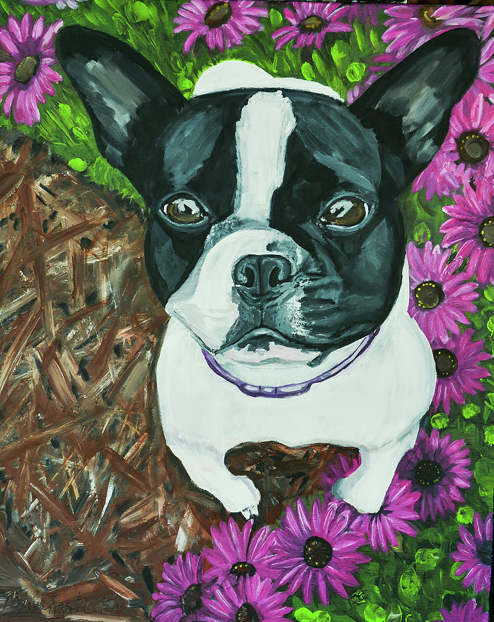 Boston Terrier by MKD Lincoln