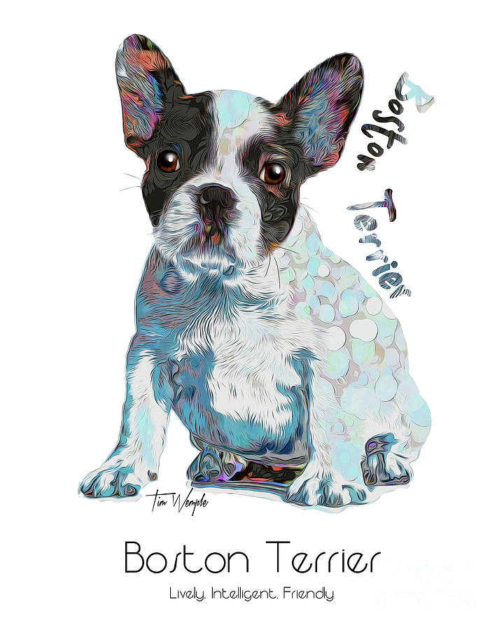 Boston Terrier Digital Art - Boston Terrier Pop Art by Tim Wemple