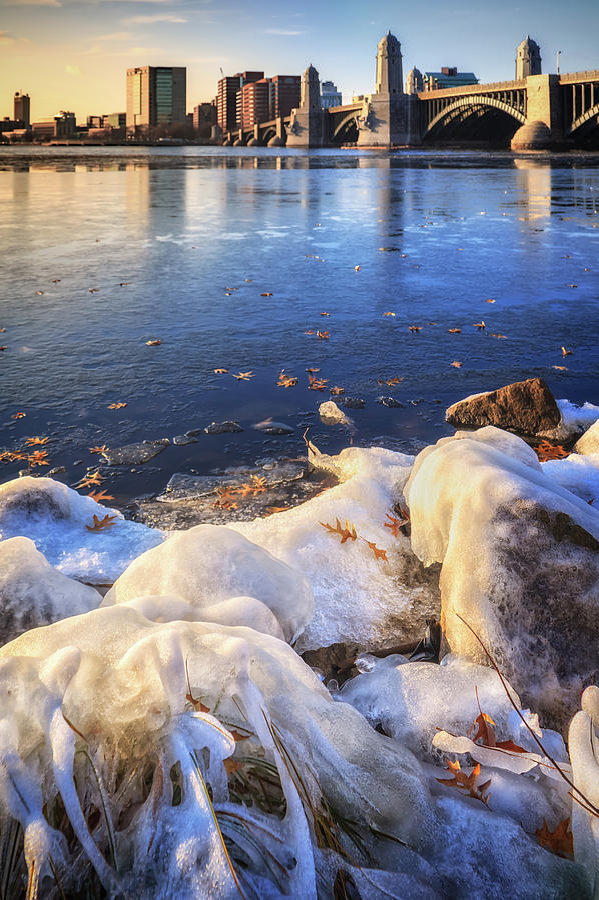 Boston's Wild Arctic by Sylvia J Zarco