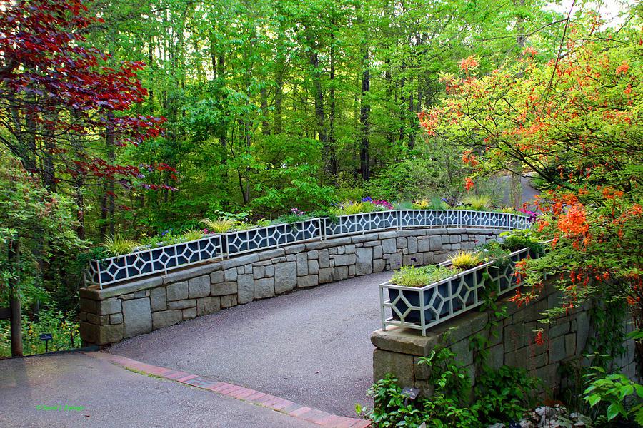 Athens Botanical Garden Photograph - Botanical Bridge by Sandi Kabage