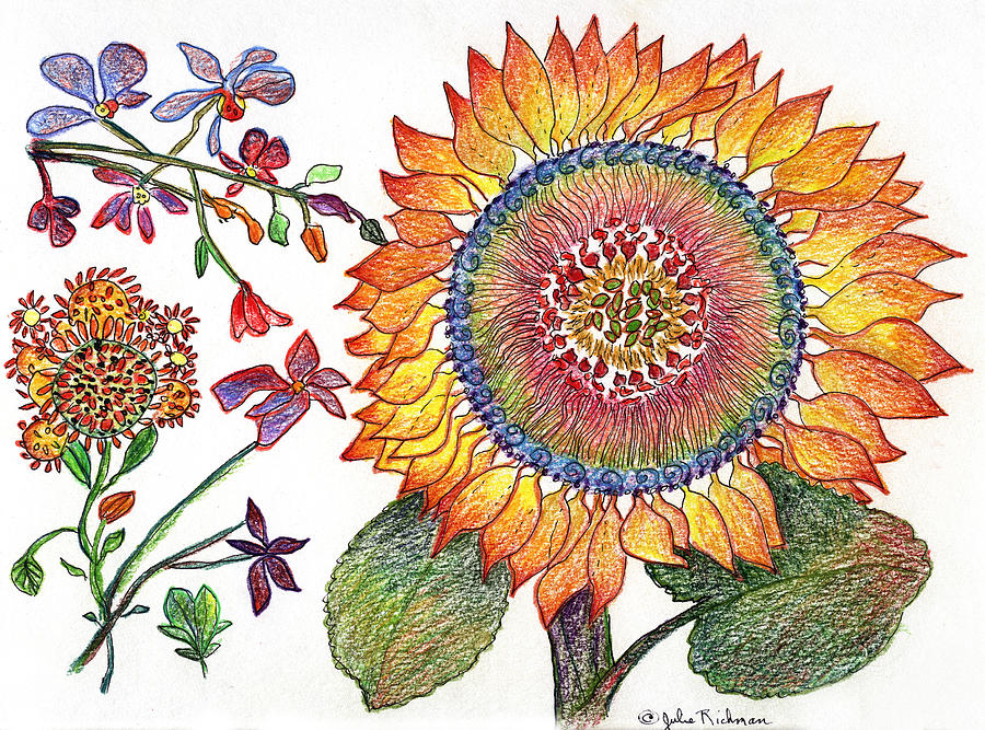 Botanical Flower-46 Sunflower Drawing Painting by Julie Richman