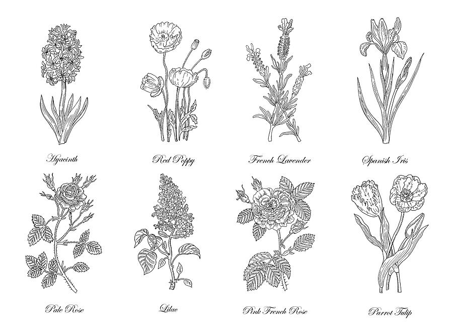 Botanical Flowers Decorative Drawing By Irina Sztukowski