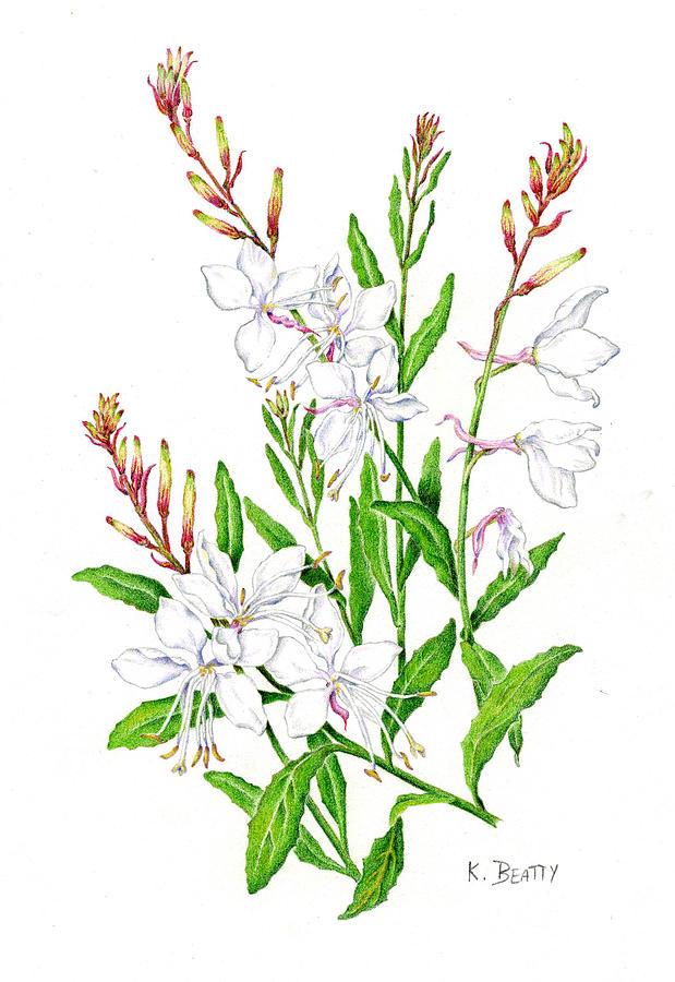 Botanical Painting - Botanical Illustration Floral Painting by Karla Beatty
