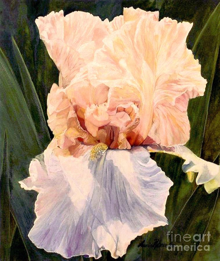 Botanical Painting -  Botanical Peach Iris by Laurie Rohner