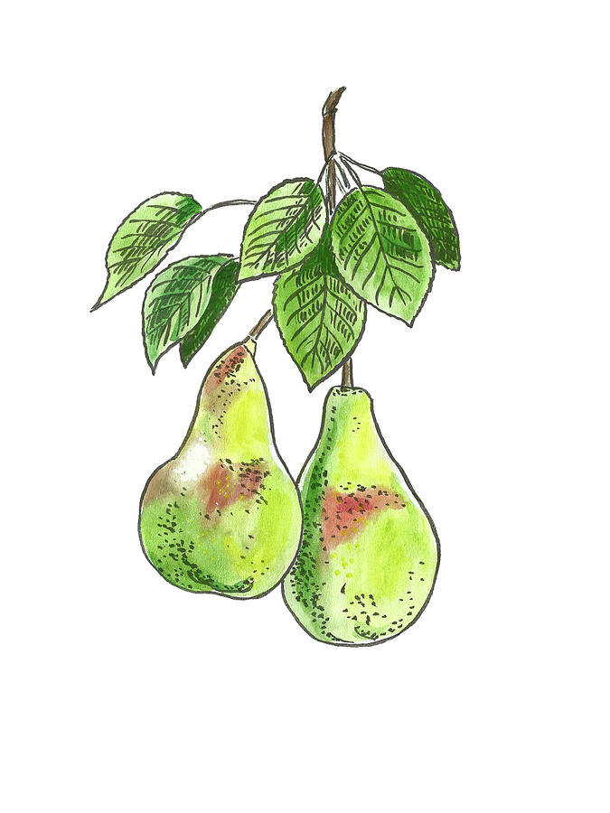 Botanical. Pear 2 Painting