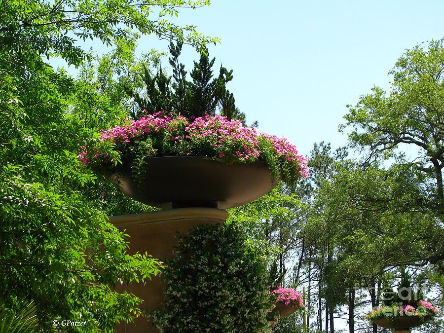 Patzer Photograph - Botanical Sky by Greg Patzer