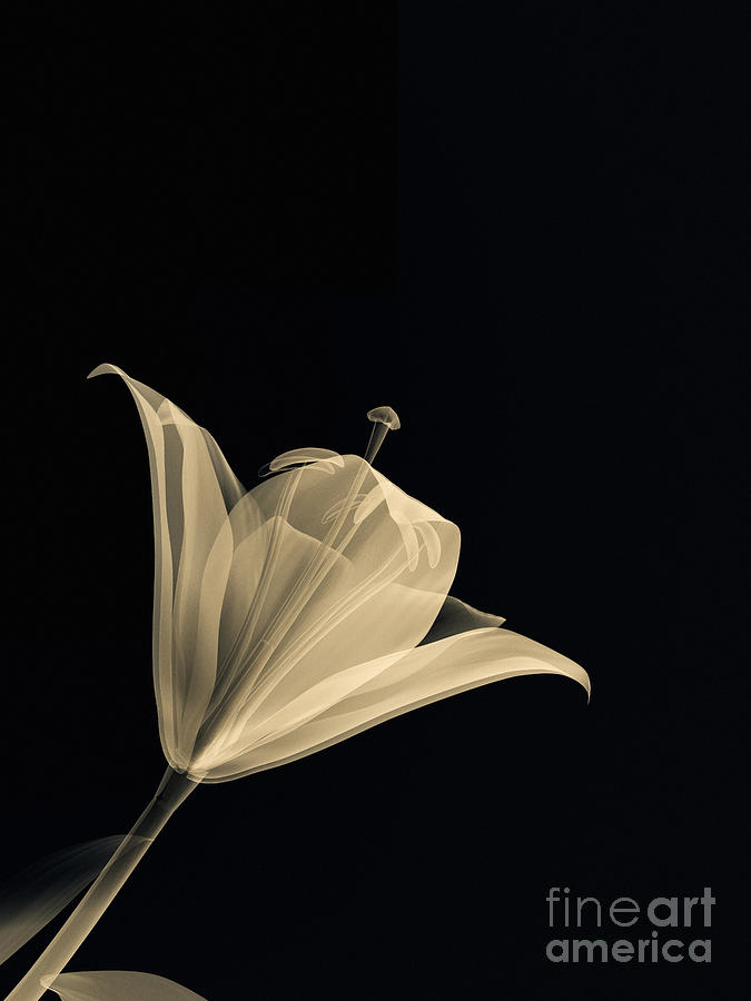 Background Digital Art - Botanical Study 3 by Brian Drake - Printscapes
