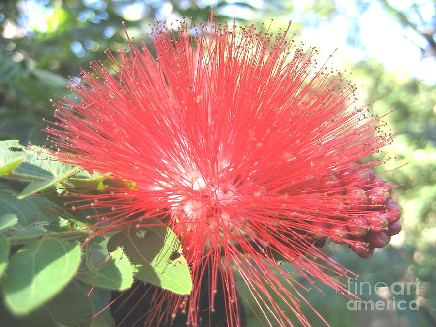 Bottle Brush by Ky Wilms