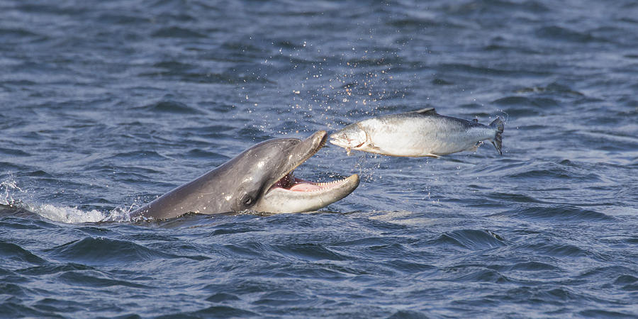 Pictures of bottlenose dolphins eating for What do fish eat in the ocean