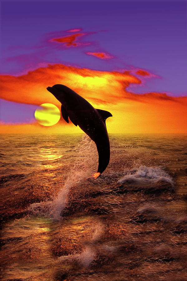 Bottlenose Dolphin Jumping At Sunset Photograph by Gail ...