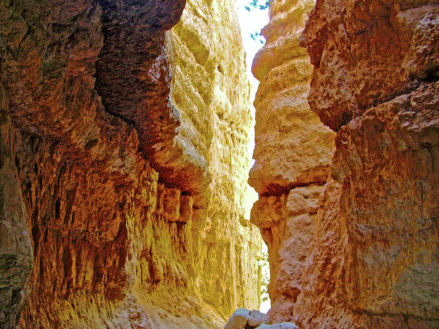 Utah Photograph - Bottom Of Wall Street On Navajo Trail In  Bryce Canyon National Park, Utah  by Ruth Hager