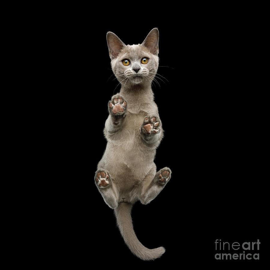 Pads Photograph - Bottom view of Kitten by Sergey Taran