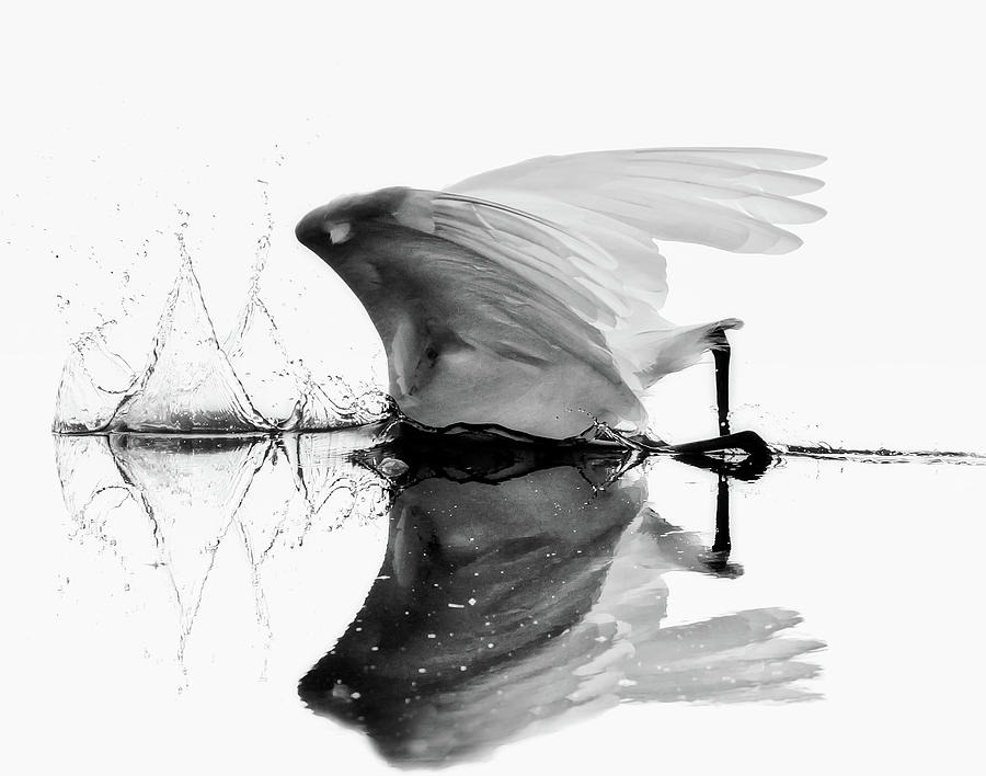Egret Photograph - Bottoms Up by Ina Hoekstra