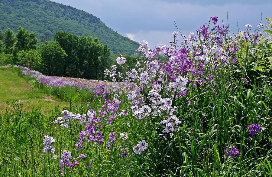 Purple Flowers Photograph - Boundary Of Beauty by Stephanie Calhoun
