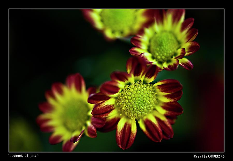Flower Photograph - Bouquet Blooms by Sarita Rampersad