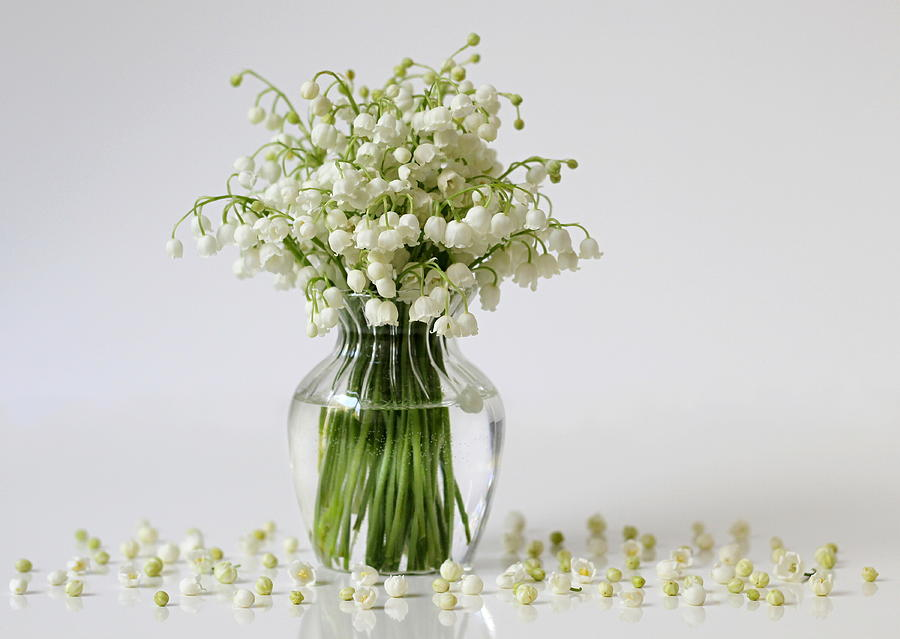 Bouquet Of Lily Of The Valley Flowers In A Vase Photograph By Ivora