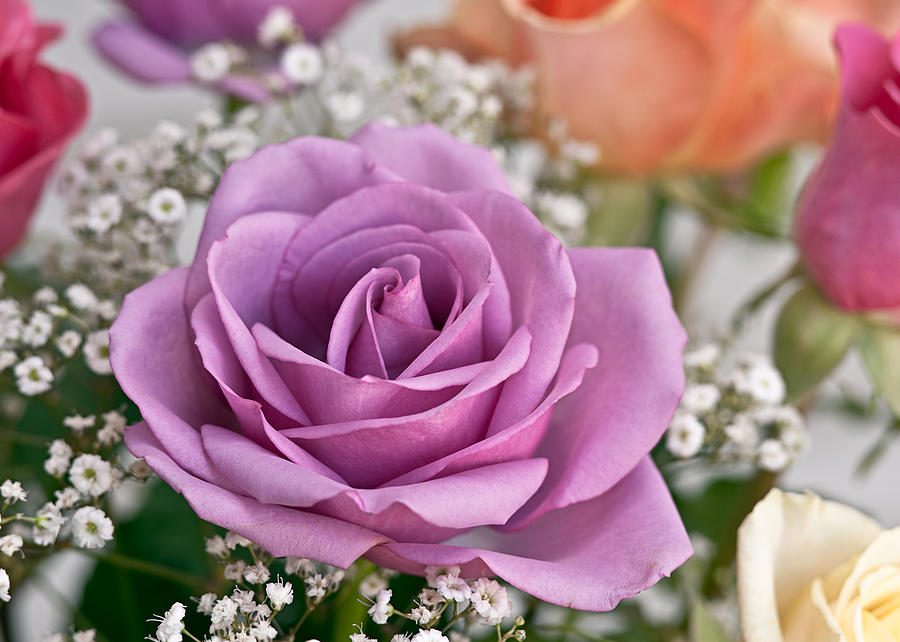 Floral Photograph - Bouquet Of Roses by Jeff Abrahamson