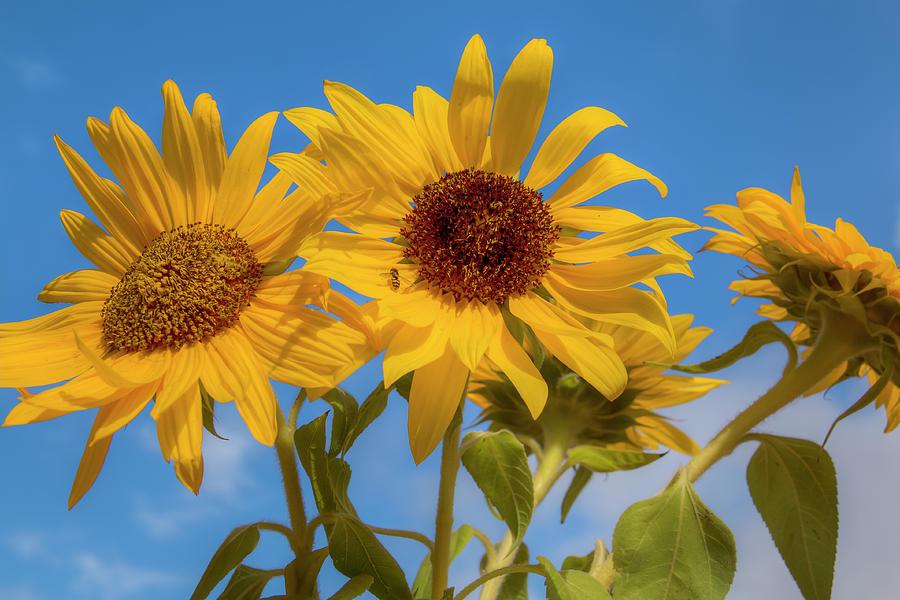 Bouquet Of Sunshine 0692 Photograph