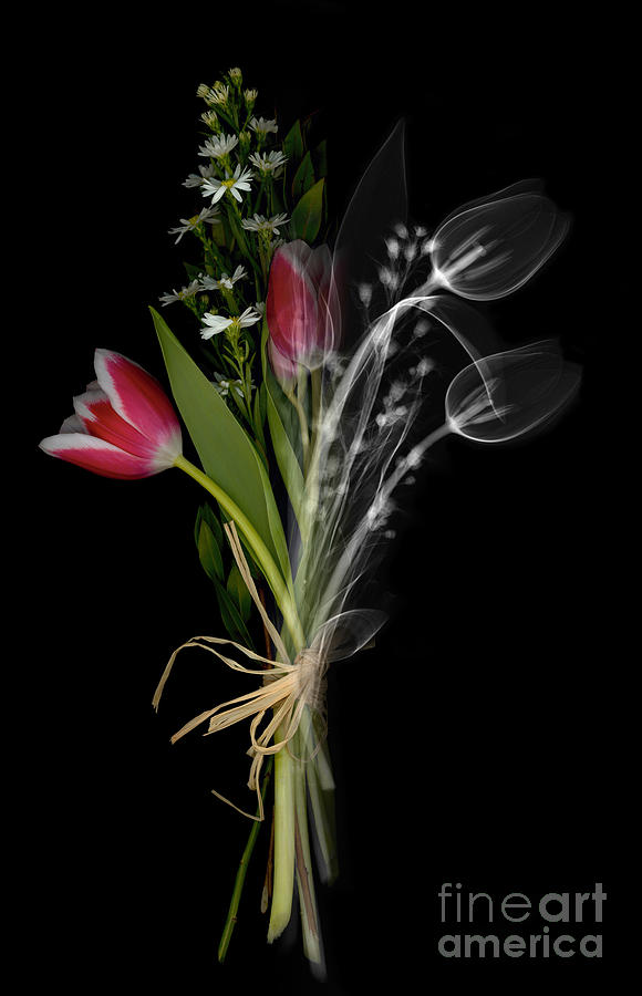 X-ray Photograph - Bouquet X-ray by Ted Kinsman