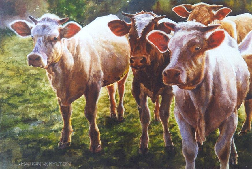 Animals Painting - Bovine Curiosity by Marion  Hylton