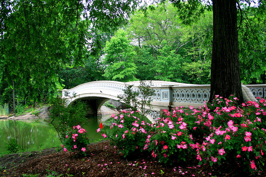 New York City Photograph - Bow Bridge In Springtime by Christopher Kirby