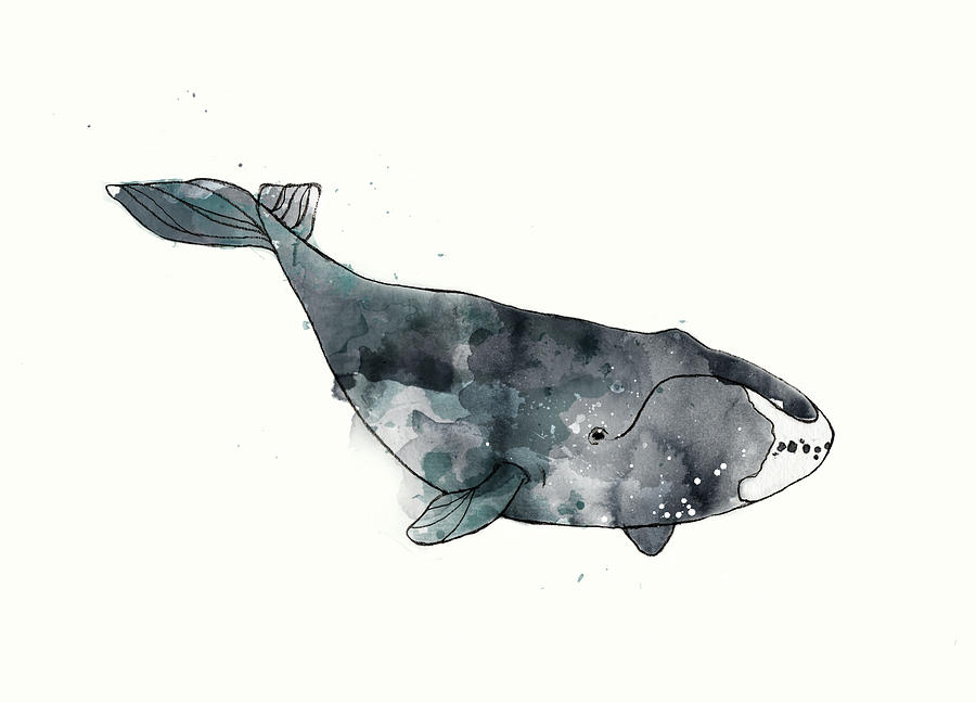 Whale Painting - Bowhead Whale From Whales Chart by Amy Hamilton