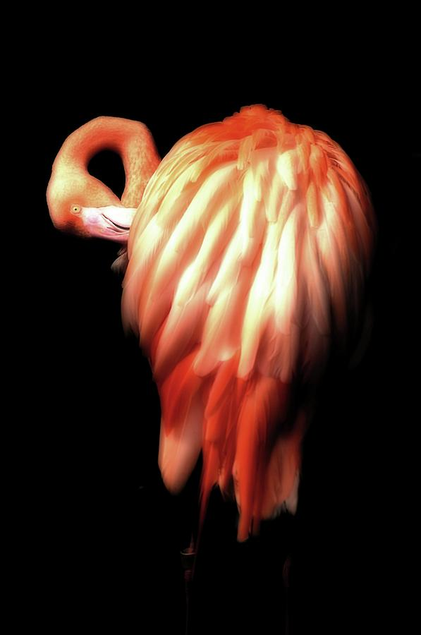 Bowie Flamingo by Beth Akerman