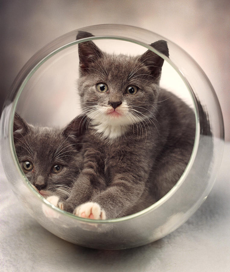 Kittens Photograph - Bowled Over by Judi Quelland
