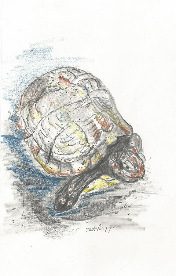 box turtle drawing by nate price