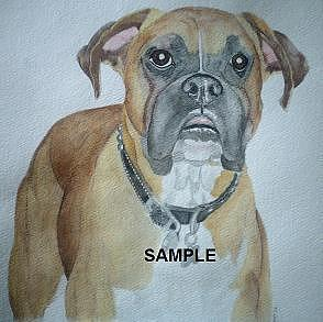 Boxer Painting by Billie Riholm