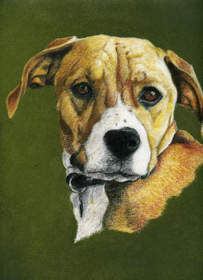 Dog Pastel - Boxer Boy by Claire Muller