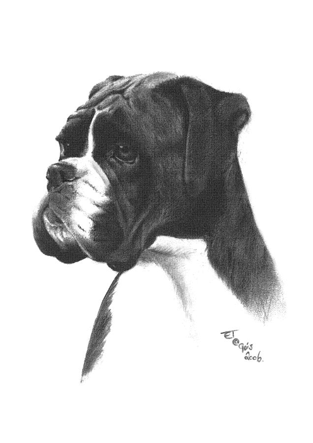 Boxer Dog Drawing By Ed Teasdale