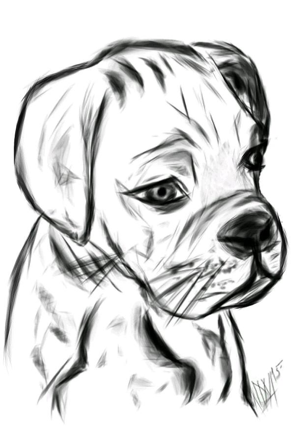Animal Digital Art - Boxer Pup by Leah Mitchell