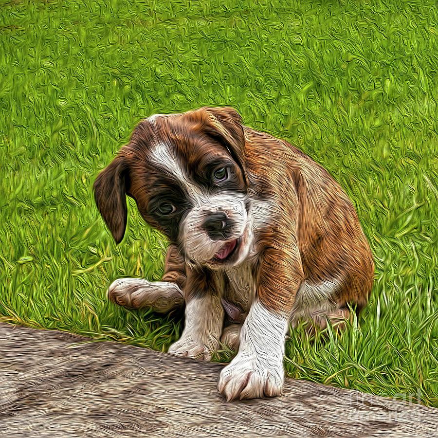 Boxer Puppy Photograph