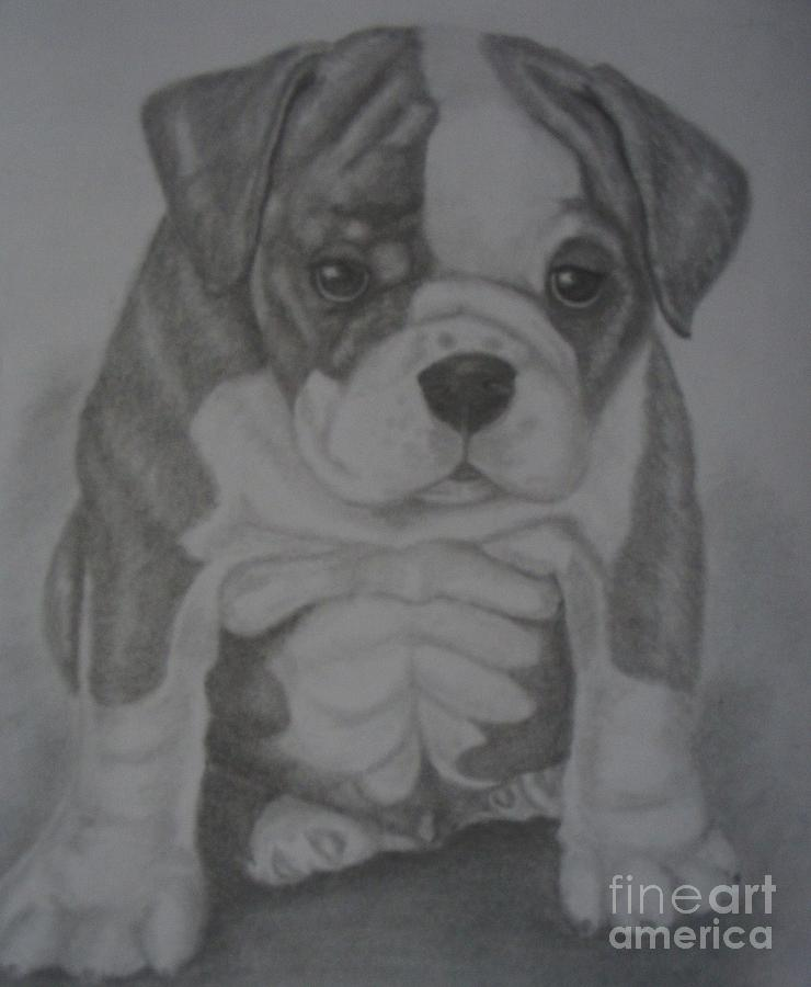 Dog Drawing - Boxer Puppy by Ian Lennox