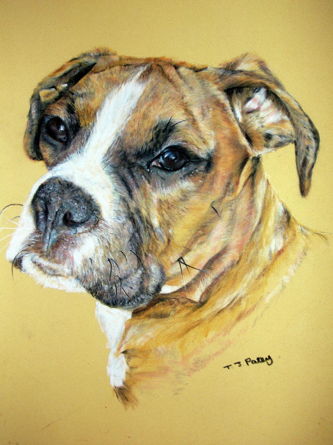 Dog Painting - Boxer by Tanya Patey