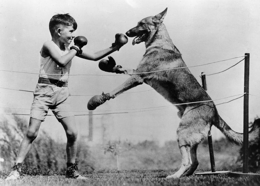 8-9 Years Photograph - Boxing With Dog by Topical Press Agency