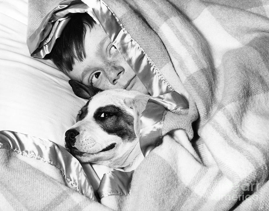 1940s Photograph - Boy And Dog Hiding Under Blanket by D. Corson/ClassicStock