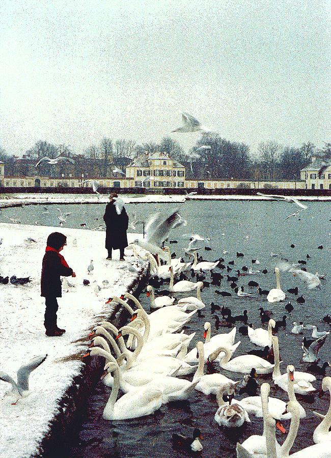 Swans Photograph - Boy Feeding Swans- Germany by Nancy Mueller