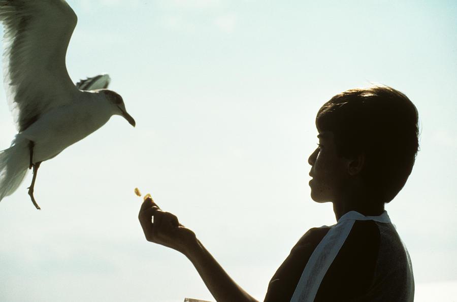 Boy Feeds Seagull Photograph
