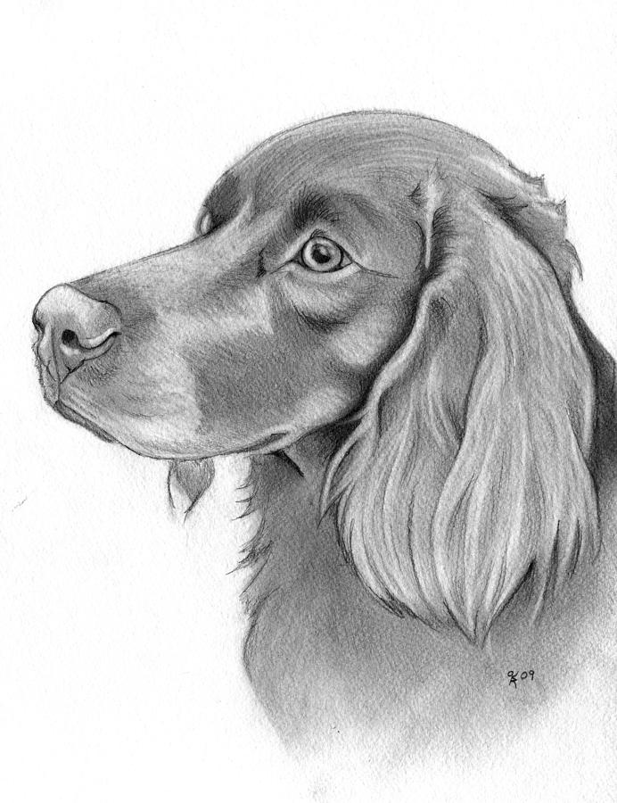 Dog Portraits Drawing - Boykin Spaniel by Katy Ryan