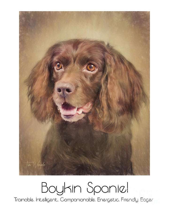 Boykin Digital Art - Boykin Spaniel Poster by Tim Wemple