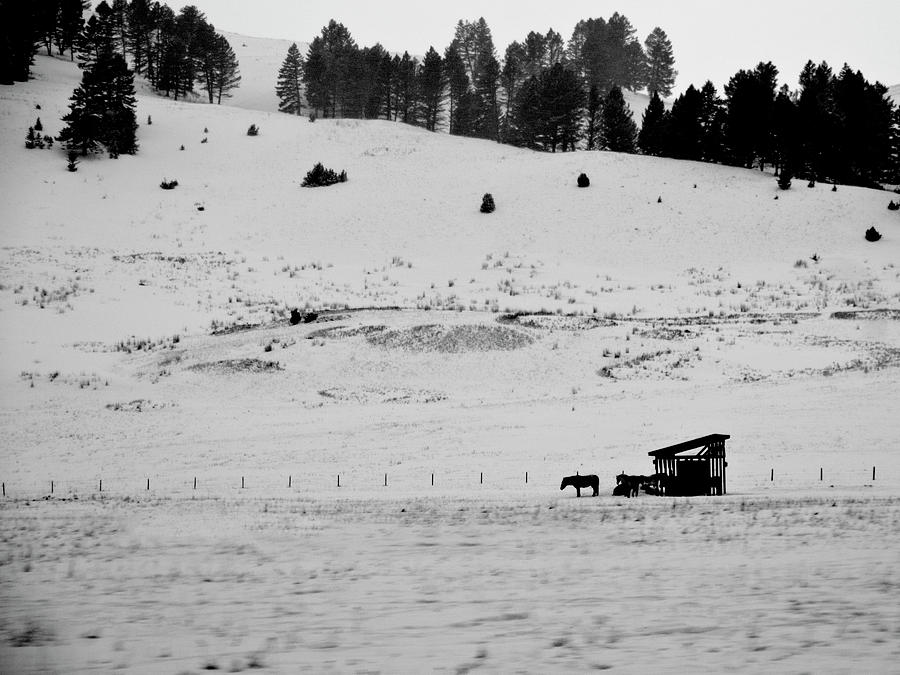 Montana Photograph - Bozeman winter by Roy Nierdieck