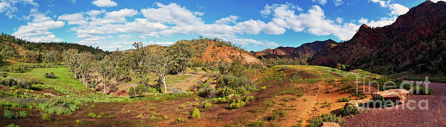 Bracchina Gorge Flinders Ranges South Australia Photograph by Bill Robinson