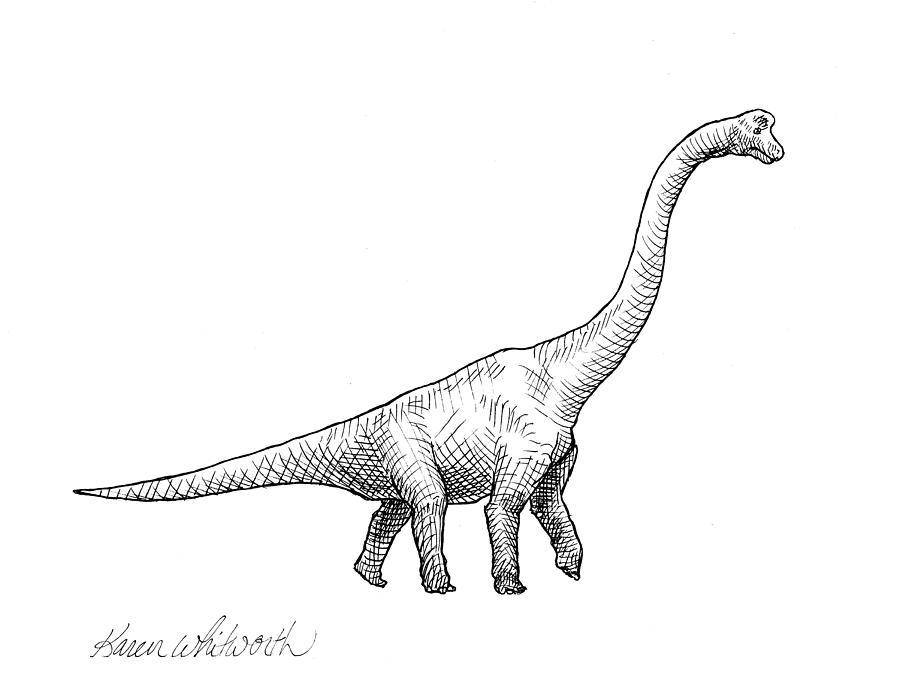 brachiosaurus dinosaur black and white dino drawing