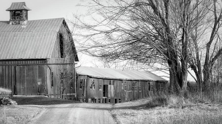 Black And White Photograph - Bradford County Road by Frank Morales Jr