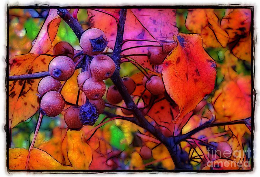 Bradford Photograph - Bradford Pear In Autumn by Judi Bagwell