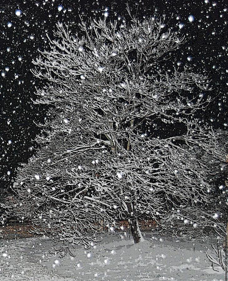 Snow Photograph - Bradford Pear by Patricia Motley