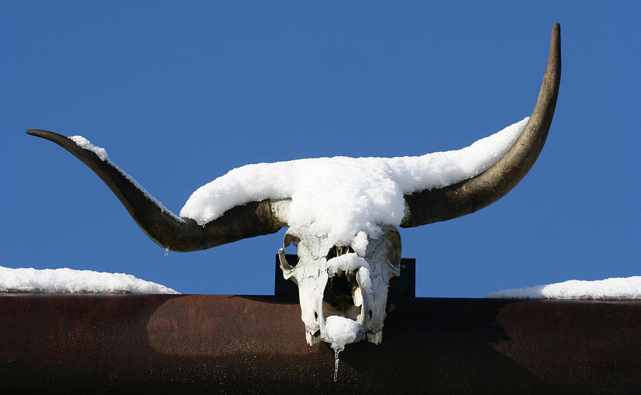 Horns Photograph - Brain Freeze by Holly Ethan