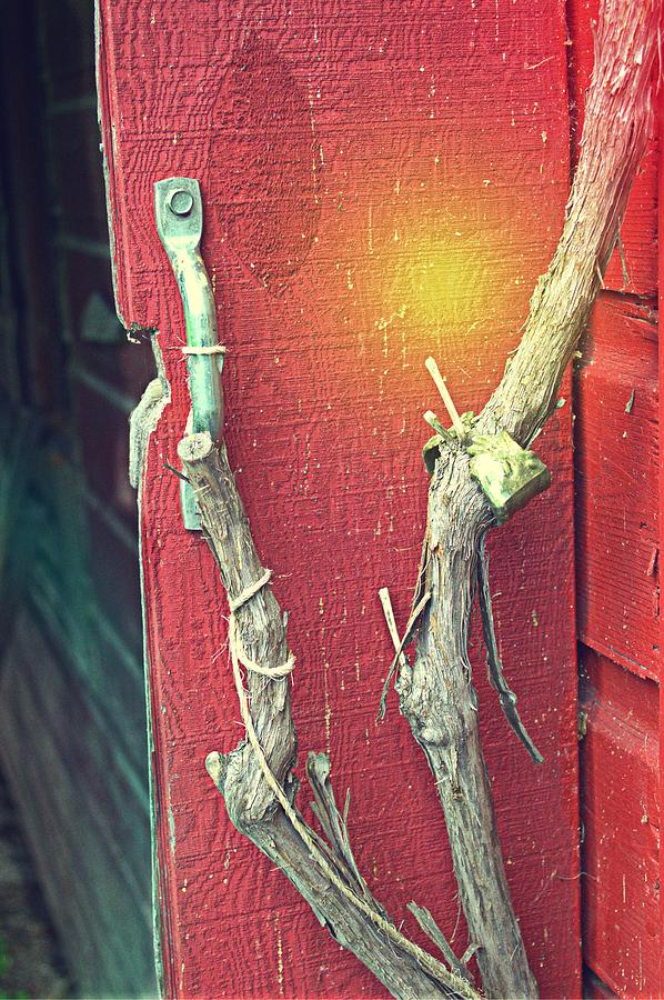 Barn Photograph - Branch by Mike McCool